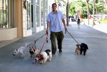 Walking dogs could earn you extra income.