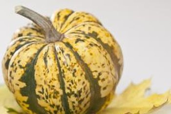 Dumpling squash provide an interesting textural element for fall decorations, but spoil quickly.