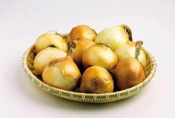 All onions are biennial plants that mature the second year after planting.