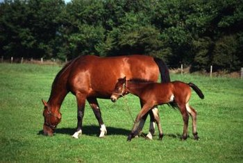 Grazing fields may contain grasses that are toxic for horses.