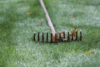 Rake the bare spots with a standard rake to remove leaves and debris.