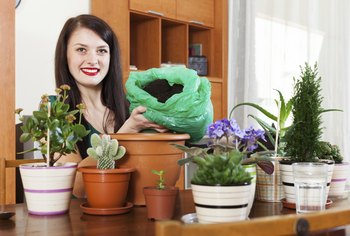 The potting soil you use also affects how healthy your houseplants are.