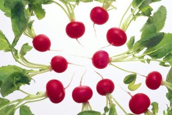 Small radish varieties mature quickly, within three to four weeks.