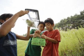 A bug hunt gives kids a chance to observe real insects.