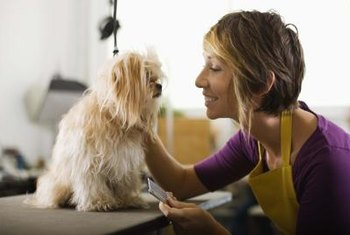 Grooming is a satisfying career for those who love animals.