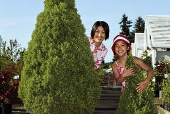 Save pruning effort by fitting your juniper to its container.