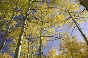 People can help keep deciduous tree populations thriving.