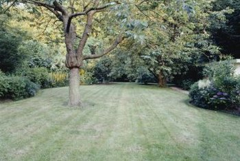 Repair your lawn without starting completely over.