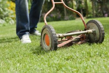 Cutting your centipede grass too short can cause bare patches.