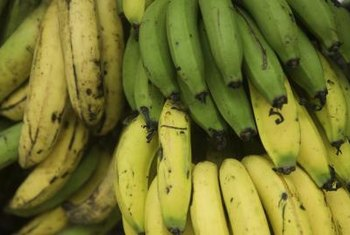 Color is one indicator of a banana's ripeness.