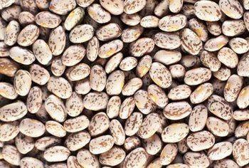 You can use dried pinto beans to grow new bean plants.