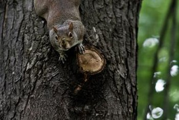 Keep squirrels from scrambling around your landscape.