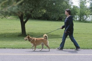 "Walk your dog to an area away from your yard to urinate to avoid the dreaded ""lawn spots."""