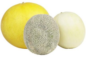Muskmelons come in a variety of sizes and colors.
