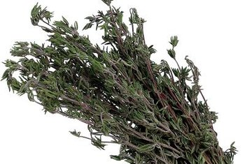 Rubbing lemon thyme leaves on your skin can repel mosquitoes.