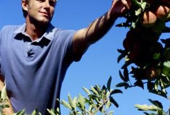 If you are new to gardening, growing a fruit tree provides a hands-on learning experience.