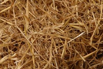 Choose weed-free straw for an organic grass seed covering.