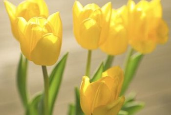 Add a splash of sunshine to your landscape with golden tulips.