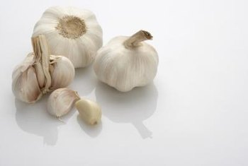 Garlic differs in shape, size and color depending on cultivar.