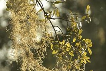 Lichen and leaves compete for sunlight.