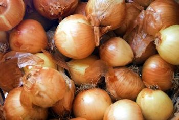 Plant red or yellow onion bulbs when there is no risk of frost during the growing season.
