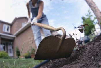 Dig through the area with a hoe to bring up stems and roots.