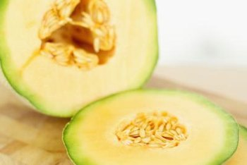 Persian melons include cantaloupes and honeydew melons.