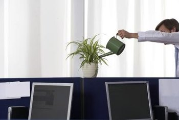 Regular feeding of balanced nutrients keeps houseplants lush and healthy.