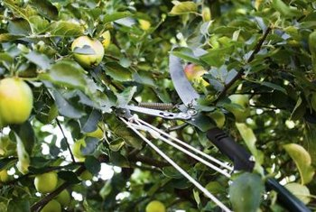 Pole pruners look complicated but are designed simply and for strength.