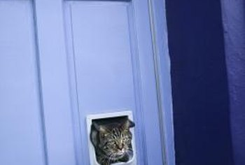 Cat doors are just like dog doors but smaller.