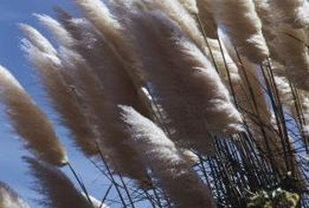 Delayed pruning allows ornamental grasses to provide winter interest.