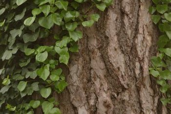 Control vines and brush with herbicides to reduce crowding and smothering of landscape plants.