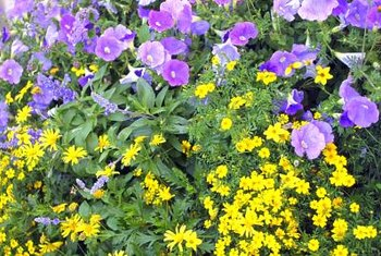 Combining annuals with other plants gives gardens a sense of abundance.