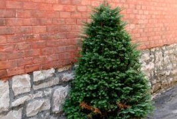 Dwarf conifer trees work well in containers tucked into small spaces.