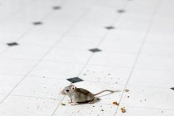 Keep mice where they belong -- outside your home.