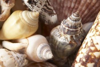 Seashell crafts can be time-consuming and require some skill to work successfully.