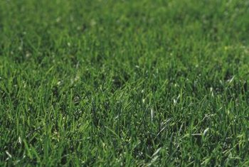 Sod is a fast, effective way to achieve a full lawn.