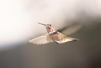 Hummingbirds are attracted to the nectar of many flowering plants.