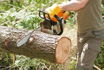 Fallen trees should be cut into manageable pieces.