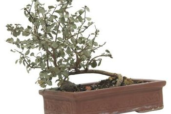Bonsai planters are attractive, but only really appropriate for bonsai trees.