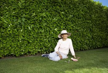Evergreen hedges provide year-long privacy.