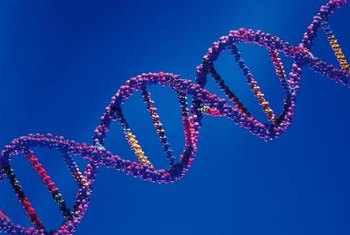 DNA is composed of nucleotides that form long chains of genetic information.