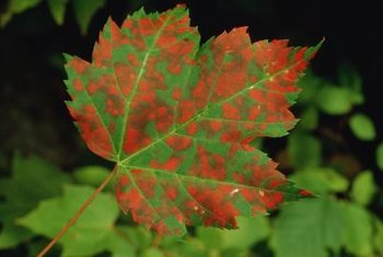 Leaf spot can be caused by a variety of fungi.