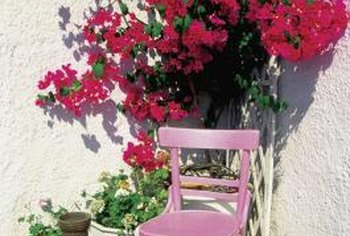Bougainvillea is a striking accent almost anywhere.