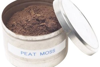 Peat moss is a primary ingredient in most potting soils.