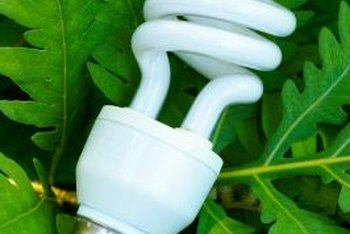 A compact fluorescent bulb can provide enough light for an aralia.