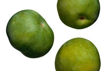 Sapote trees grown from seed are typically used for rootstock.
