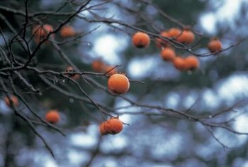 Berries on ornamental trees can brighten a landscape.