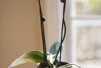 Orchids need repotting in fresh materials about every other year.