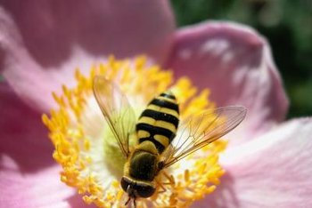 Growing bright, fragrant flowers can help to attract insect pollinators to a site.